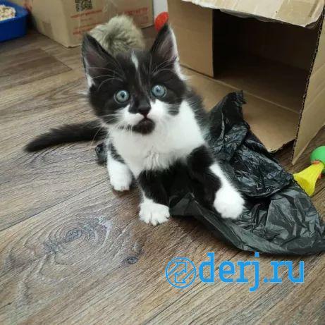 Котенок девочка ищет дом 2 месяца, САНКТ-ПЕТЕРБУРГ